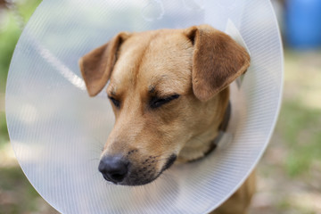 dog suffering in cone