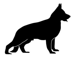 Deutscher Schäferhund stehend schwarz