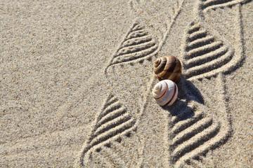 Muster im Sand und Schneckenhäuser