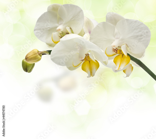 twig blossoming orchids