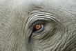 Elephant eye with a tear, detail