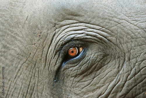 Plexiglas Olifant Elephant eye with a tear, detail