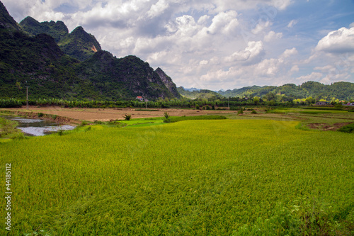 Lang Son Rice field