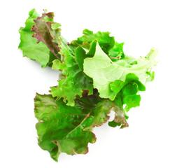 Red leaves of lettuce salad