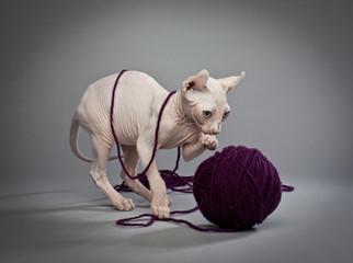 elf cat and yarn