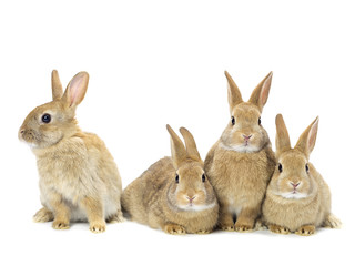 group of rabbits