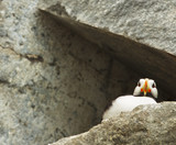 puffin from below
