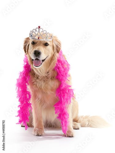 princess golden retriever