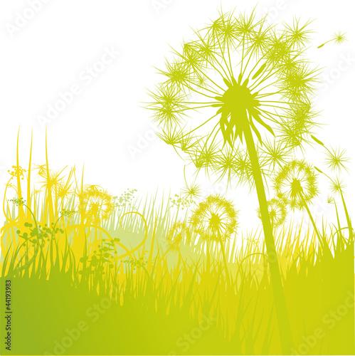 Grashalme Pusteblume und Löwenzahn