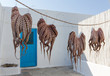 Octopuses drying in the sun in a Greek island