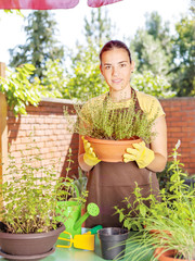 the cultivation of plants in pots