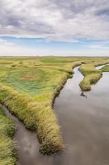 Küstenschutz - Salzwiesen an der Nordsee