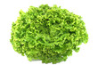 salade batavia - 44198597