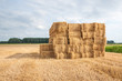 Piled straw packs in the field