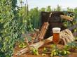 beer and hop garden
