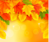 Fototapety Autumn background with leaves  Back to school  Vector