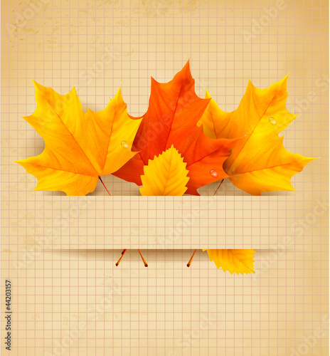 Autumn leaves on a old paper  Back to school Vector