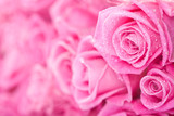Fototapety Pink roses