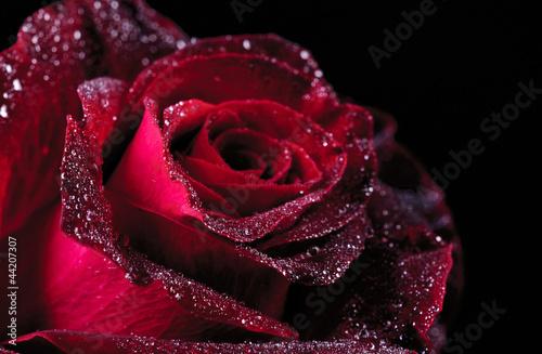 fototapete rose schlafen blume blume pixteria. Black Bedroom Furniture Sets. Home Design Ideas
