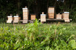 Beehives close to a forest in Germany