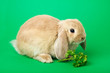 rabbit on a green background