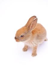 Rabbit on white
