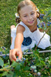 Lovely girl picking fresh blueberries in the garden