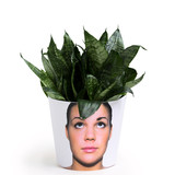 Flower heads of