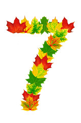 Autumn maple Leaves in the shape of number 7