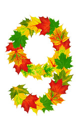 Autumn maple Leaves in the shape of number 9
