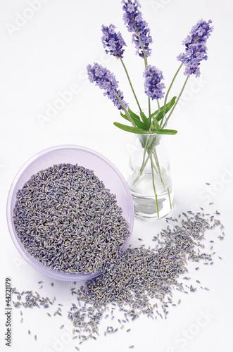 true Lavender (echter Lavendel)