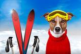 Fototapety winter dog snow