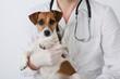 Vet and dog - 44222985