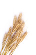 Wheat ears isolated on white