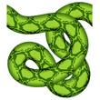 vector green snake seamless
