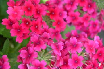 fiori fioriti