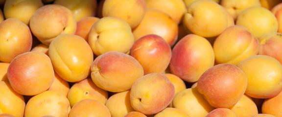 aprikose 2