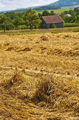 Getreidefeld mit Stroh