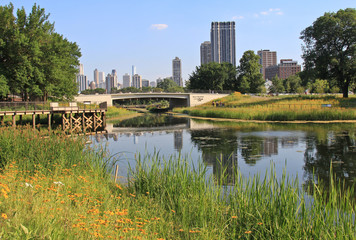 Lincoln Park Zoo showing water, flowers and Chicago skyline
