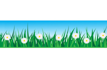 seamless grass with daisies