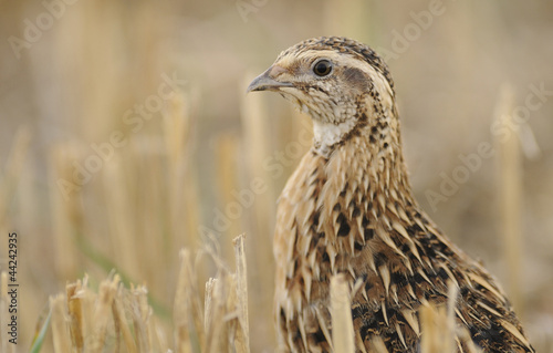 Keuken foto achterwand Jacht quail