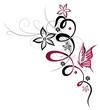 Ranke, flora, Blume, Blüte, Schmetterling, pink