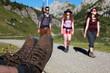 Wanderung in den Alpen