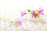 Fototapety fioletowe kwiaty