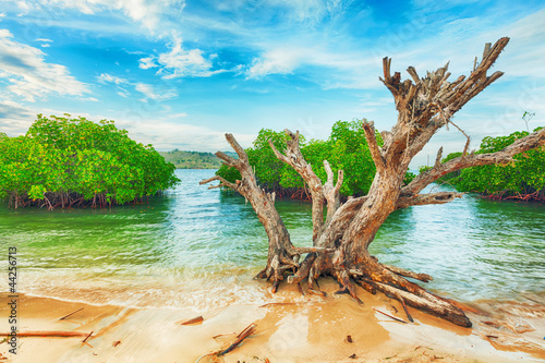 Tropical island - 44256713