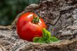 Rote Tomate mit Basilikum auf Holz
