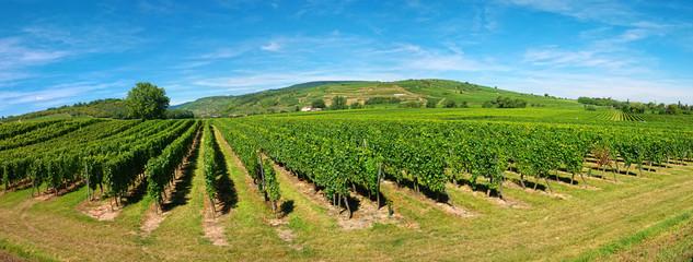 Vignoble d'Alsace sur la route des vins