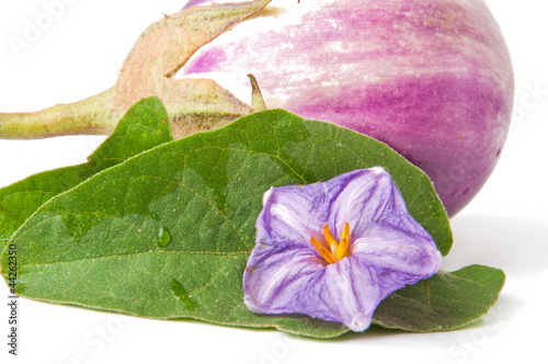 fresh eggplant on a white background