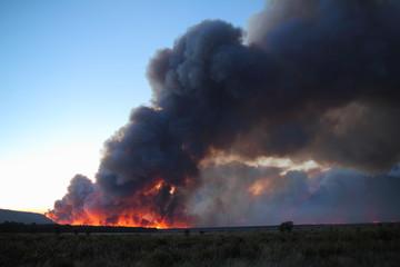 Incendio forestal de Castrocontrigo, León