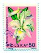 Orchidea flower